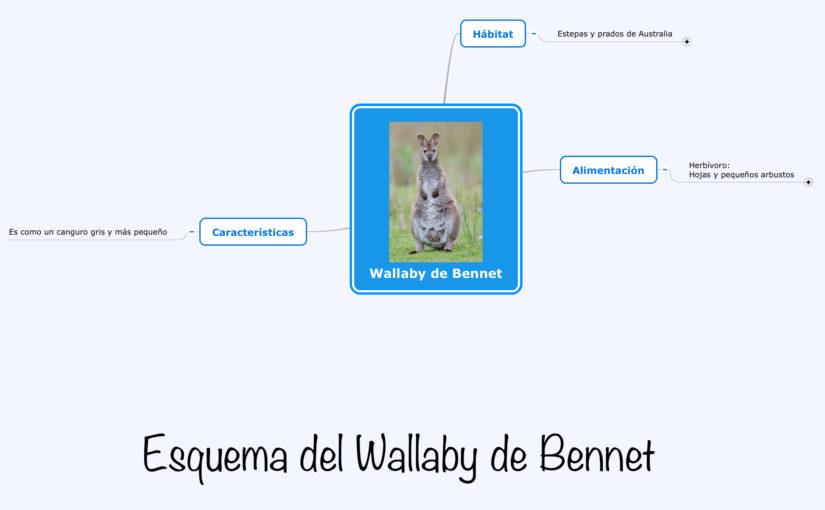 Esquema del Wallaby de Bennet