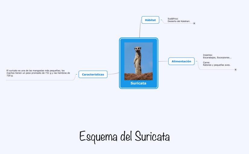 Esquema del Suricata