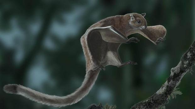 Ardilla voladora gigante japonesa (Petaurista leucogenys)